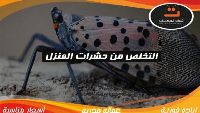 Photo of التخلص من حشرات المنزل
