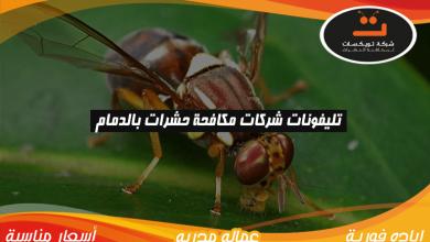 Photo of تليفونات شركات مكافحة حشرات بالدمام