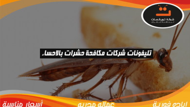 Photo of تليفونات شركات مكافحة حشرات بالاحساء