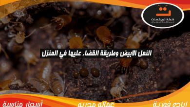 النمل الابيض و طريقة القضاء عليها في المنزل