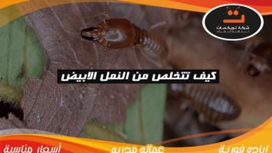 Photo of كيف تتخلص من النمل الابيض