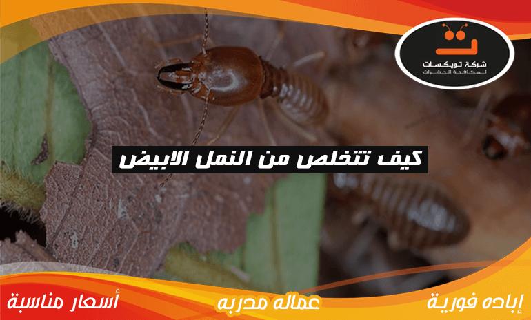 كيف تتخلص من النمل الابيض