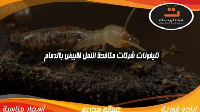 Photo of تليفونات شركات مكافحة النمل الابيض بالدمام