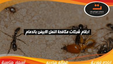 Photo of ارقام شركات مكافحة النمل الابيض بالدمام