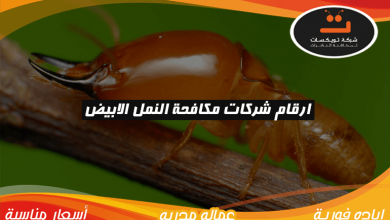 Photo of ارقام شركات مكافحة النمل الابيض