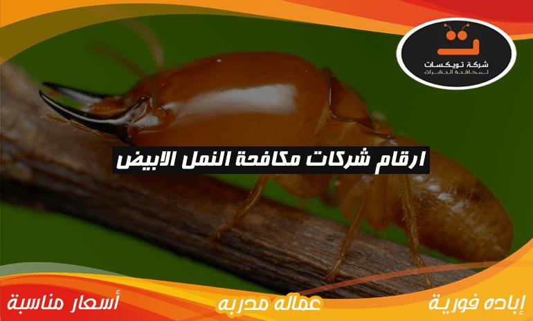 ارقام شركات مكافحة النمل الابيض