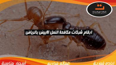 Photo of ارقام شركات مكافحة النمل الابيض بالرياض