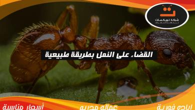 Photo of القضاء على النمل بطريقة طبيبعية