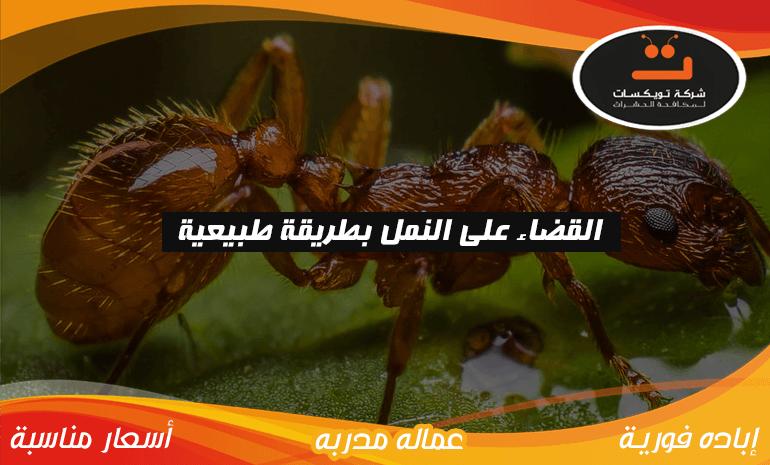 القضاء على النمل بطريقة طبيبعية
