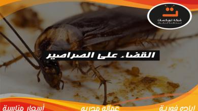 Photo of القضاء على الصراصير