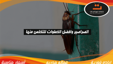 Photo of الصراصير وافضل الخطوات للتخلص منها