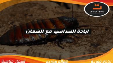 Photo of ابادة الصراصير مع الضمان