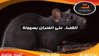 القضاء على الفئران بسهوله