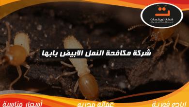 Photo of شركة مكافحة النمل الابيض بابها