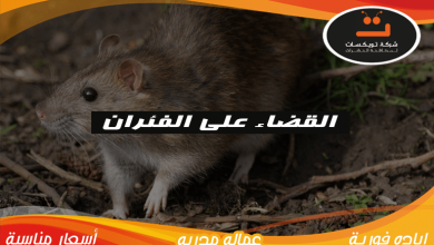 Photo of القضاء على الفئران