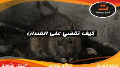 كيف تقضى على الفئران