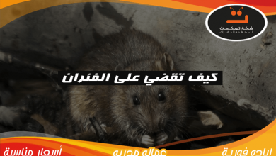 Photo of كيف تقضى على الفئران