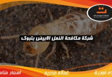 Photo of شركة مكافحة النمل الابيض بتبوك
