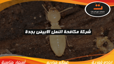 Photo of شركة مكافحة النمل الابيض بجدة