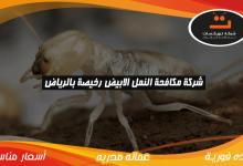 Photo of شركة مكافحة النمل الابيض رخيصة بالرياض