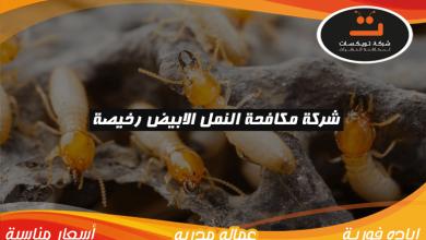 Photo of شركة مكافحة النمل الابيض رخيصة