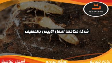 Photo of شركة مكافحة النمل الابيض بالقطيف