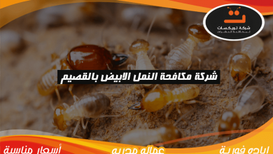 Photo of شركة مكافحة النمل الابيض بالقصيم
