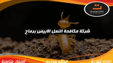 Photo of شركة مكافحة النمل الابيض برماح