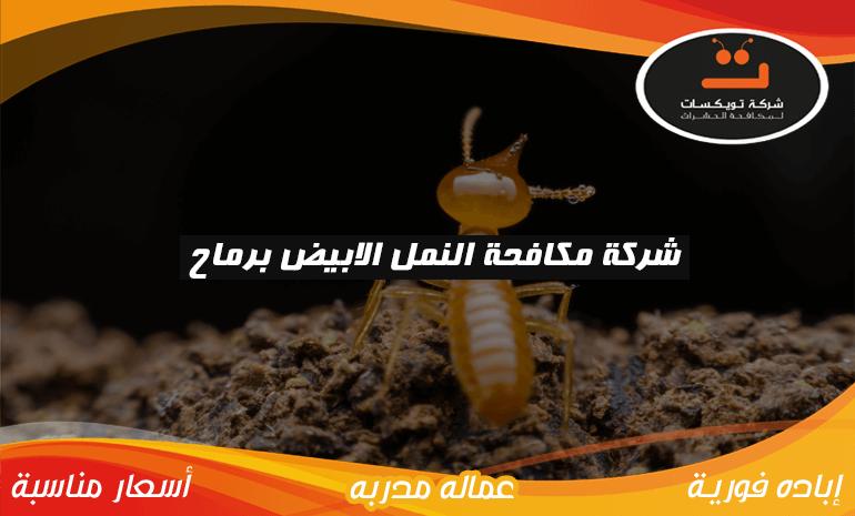 شركة مكافحة النمل الابيض برماح