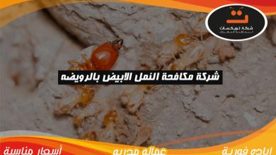 Photo of شركة مكافحة النمل الابيض بالرويضه