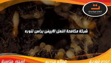 Photo of شركة مكافحة النمل الابيض براس تنوره