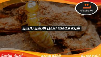 Photo of شركة مكافحة النمل الابيض بالرس