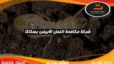 Photo of شركة مكافحة النمل الابيض بسكاكا