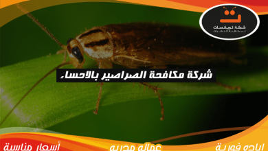 Photo of شركة مكافحة الصراصير بالاحساء