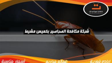 Photo of شركة مكافحة الصراصير بخميس مشيط