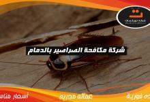 Photo of شركة مكافحة الصراصير بالدمام