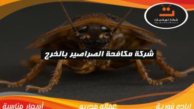 Photo of شركة مكافحة الصراصير بالخرج
