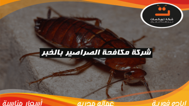 Photo of شركة مكافحة الصراصير بالخبر