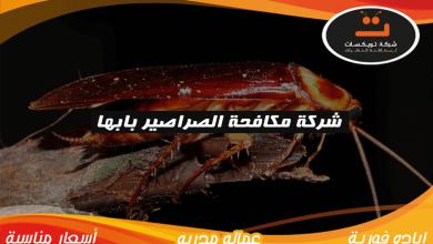 Photo of شركة مكافحة الصراصير بابها