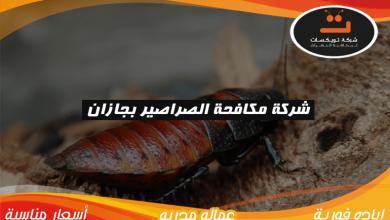 شركة مكافحة الصراصير بجازان